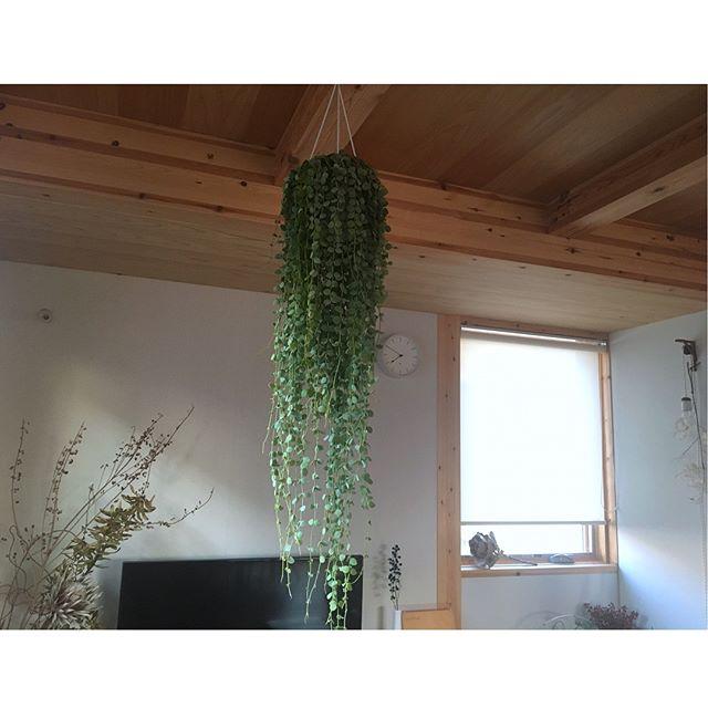 大胆植物で個性のある空間作り2