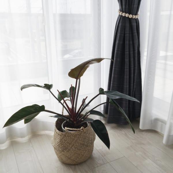 観葉植物6