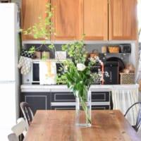 初夏を爽やかに彩る♪オシャレで優し気なグリーンがたまらない観葉植物4選
