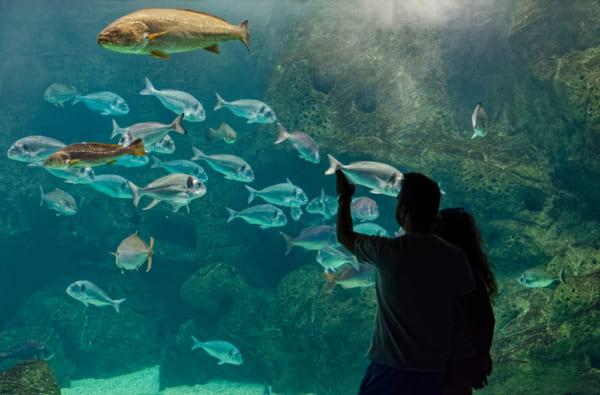 水族館デートに誘う男性の理由・心理