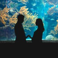 水族館デートは付き合う前に行こう♡恋が発展する女性のモテ仕草&会話術
