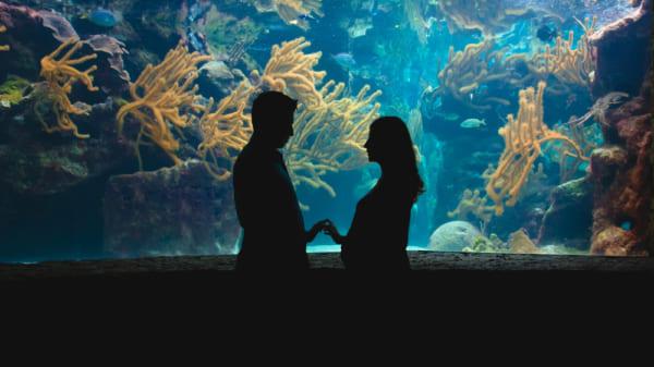 水族館デートで告白させる方法