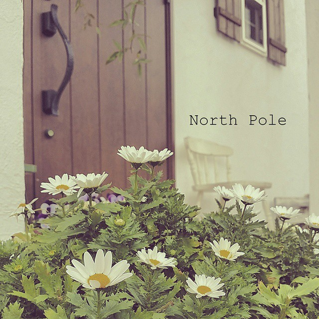 玄関ポーチにおすすめの植物・お花12