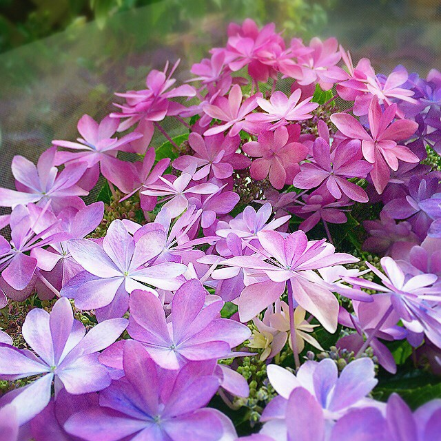玄関ポーチにおすすめの植物・お花9