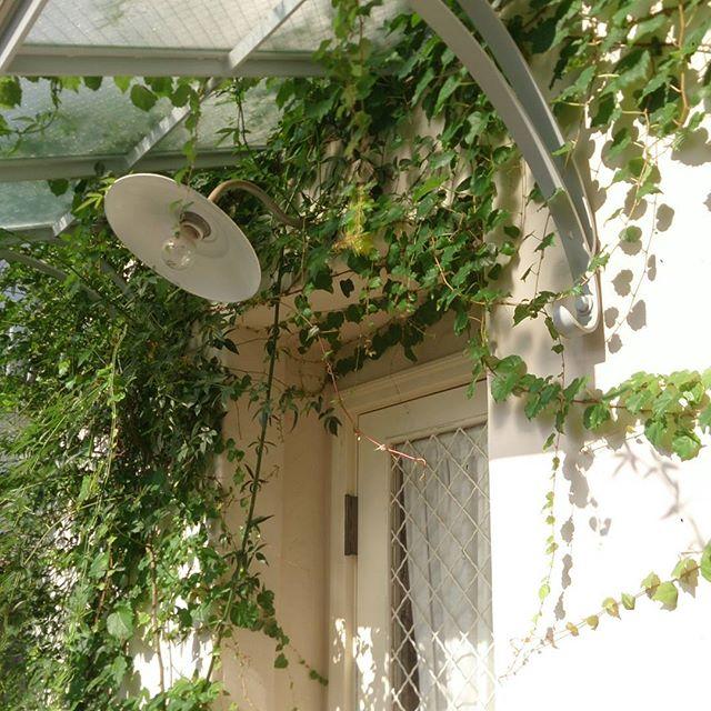 玄関ポーチにおすすめの植物・お花19
