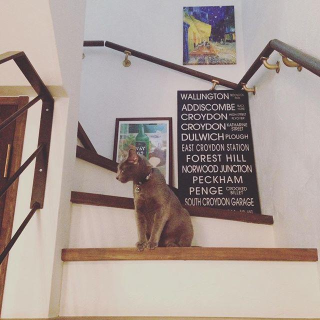 階段にもリラックス要素