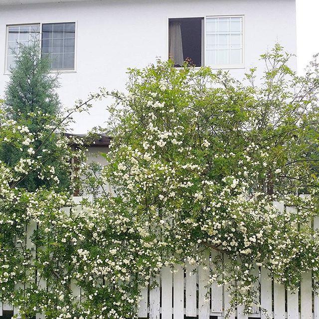 玄関ポーチにおすすめの植物・お花20