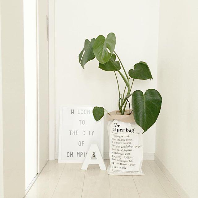3. 耐陰性の観葉植物を置く