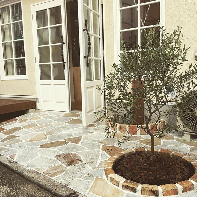 玄関ポーチにおすすめの植物・お花6