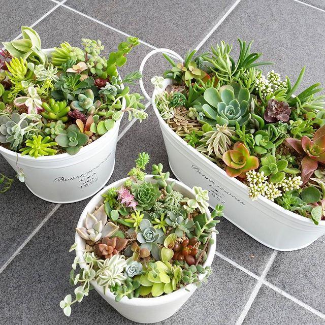 玄関ポーチにおすすめの植物・お花18