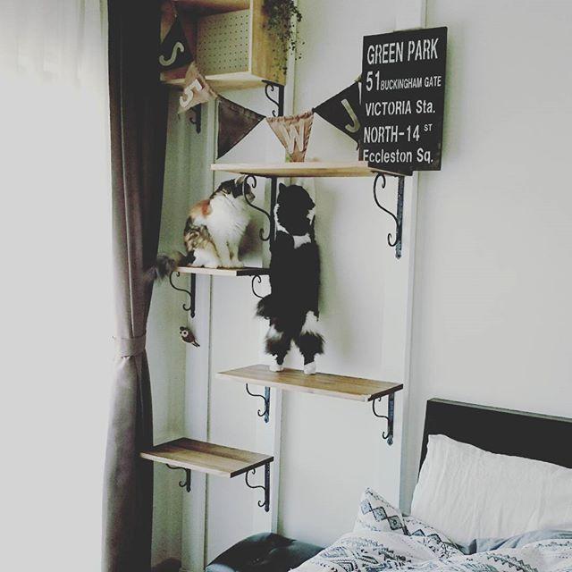 キャットウォーク DIY 木材3