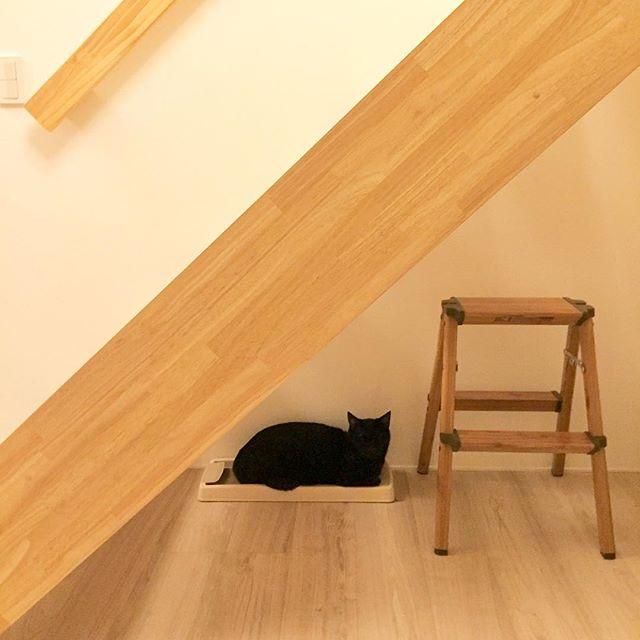 猫 インテリア8