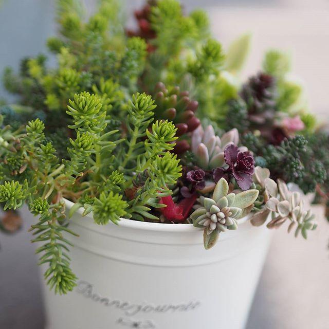 寄せ植えをするなら、お気に入りの雑貨に♡5