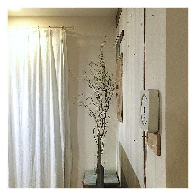 枝もの植物9