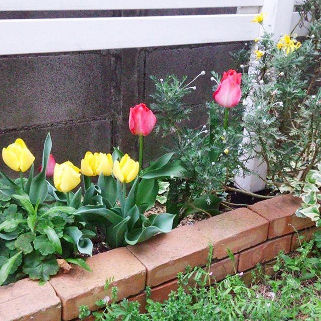 玄関ポーチにおすすめの植物・お花4
