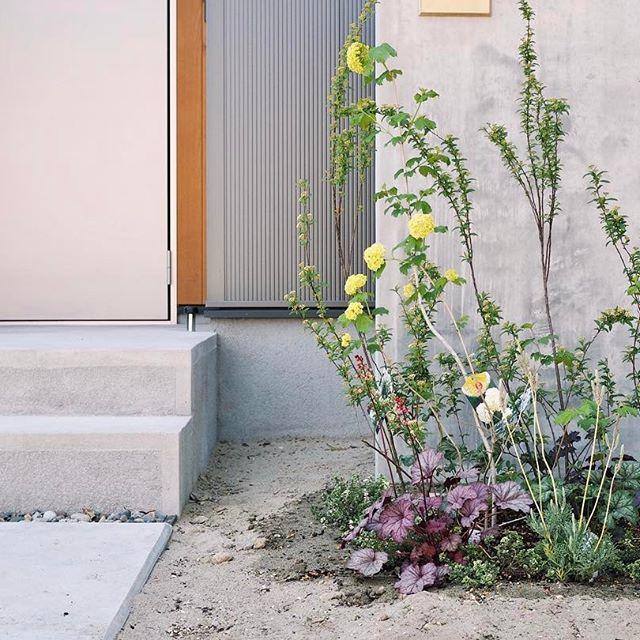 玄関ポーチにおすすめの植物・お花17