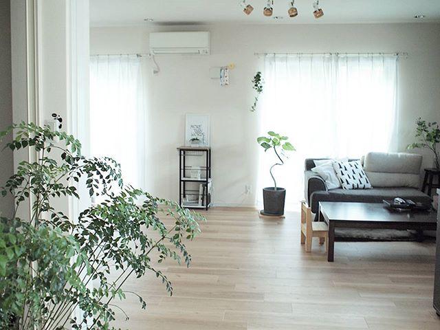 自然界の空気洗浄「木」で爽やかなお部屋に2