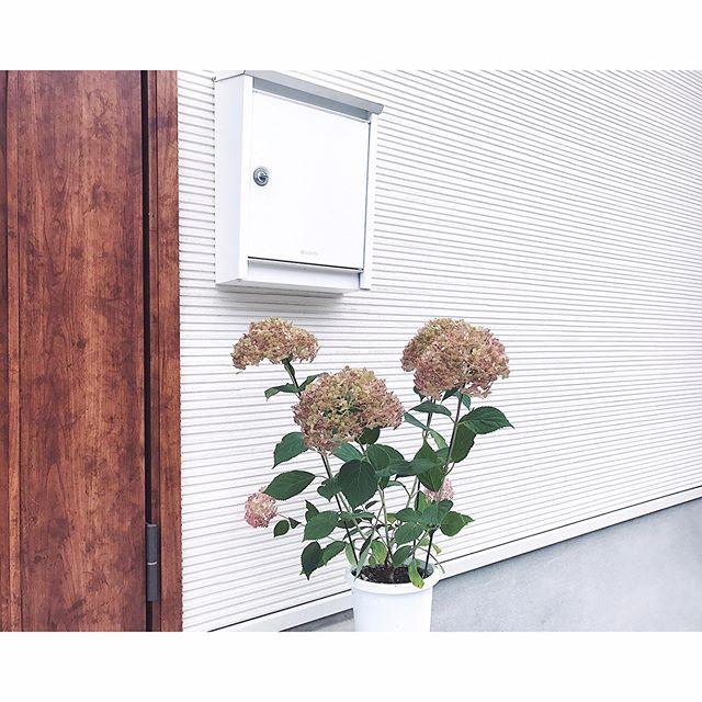 玄関ポーチにおすすめの植物・お花8