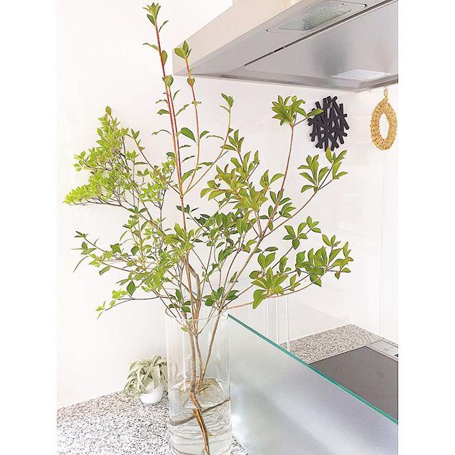 枝もの植物4