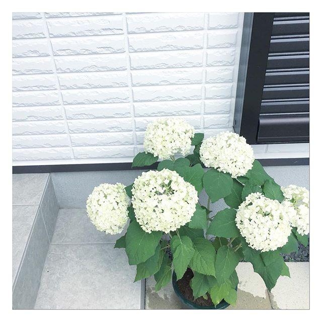 玄関ポーチにおすすめの植物・お花7