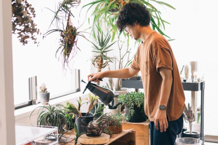 インテリアに植物をとりいれる6
