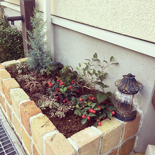 玄関ポーチにおすすめの植物・お花5