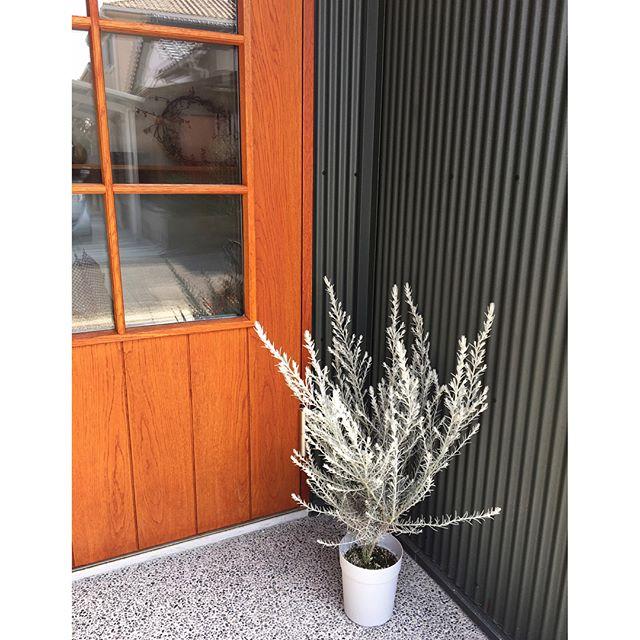 玄関ポーチにおすすめの植物・お花13
