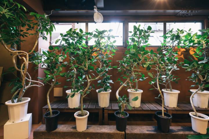 インテリアに植物をとりいれる8