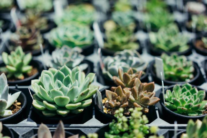 インテリアに植物をとりいれる7
