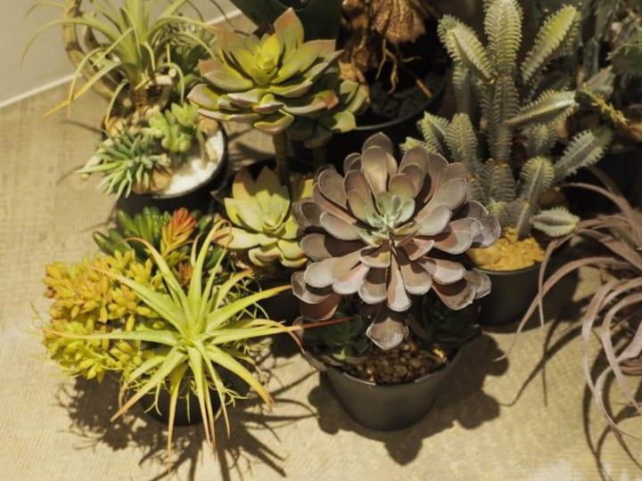 インテリアに植物をとりいれる3