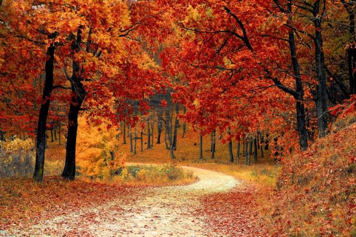 秋におすすめのデート《定番》