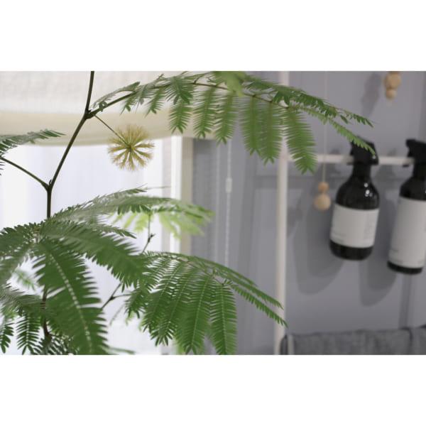 観葉植物9