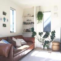 ボタニカルな魅力をお部屋にプラス♪個性豊かな観葉植物「モンステラ」をご紹介!