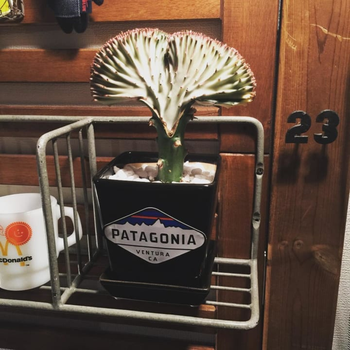 不思議な魅力あふれる多肉植物「ユーフォルビア」2