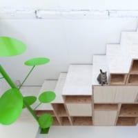 キャットウォークDIY特集!賃貸&初心者さんも挑戦できる猫のためのインテリア