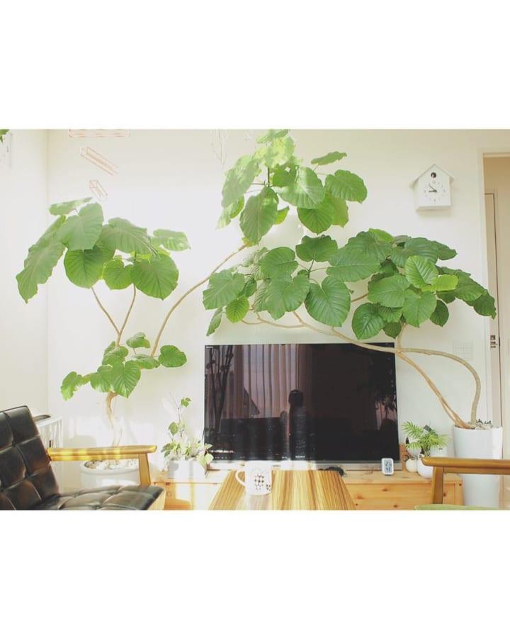 グリーンいっぱいの癒しあふれるお部屋8
