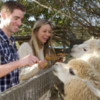 動物園デートに誘われた!大人の楽しみ方&注意点を解説します♡