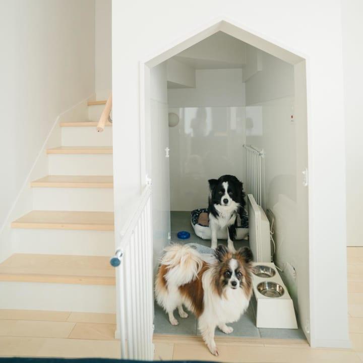 犬 暮らす 家13