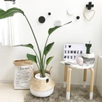 夏にピッタリの観葉植物をご紹介!癒しとオシャレな雰囲気漂うお部屋に