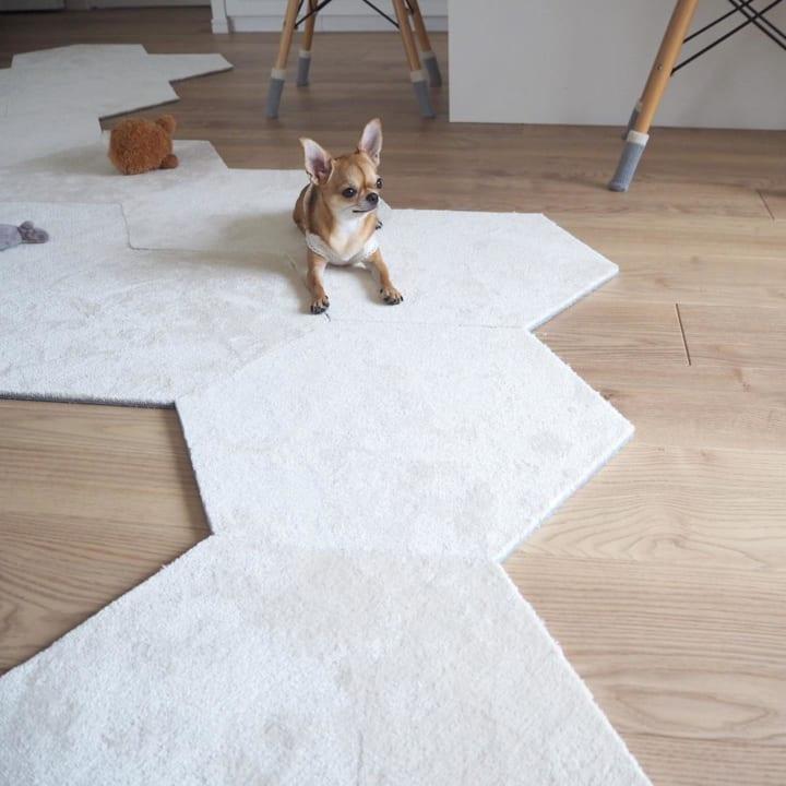 犬 暮らす 家4