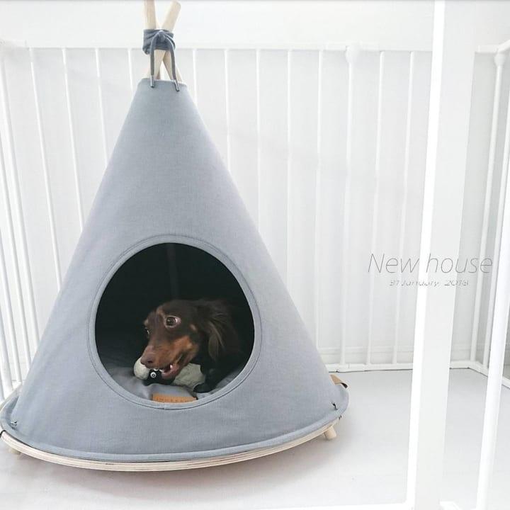 犬 暮らす 家12