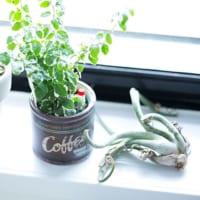 人気の観葉植物一覧☆部屋をおしゃれにするおすすめの種類&育て方をご紹介!