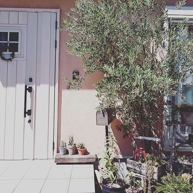 玄関インテリア 観葉植物7