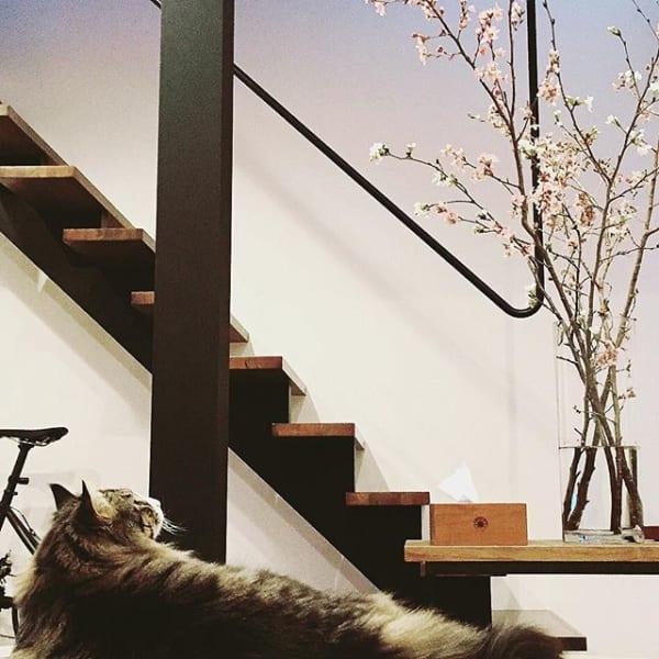 玄関から春を取り入れる桜のコーディネート