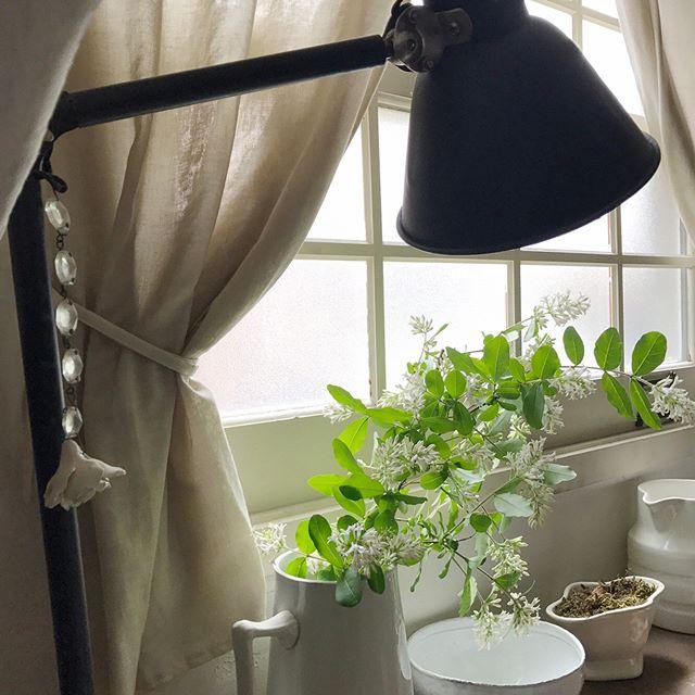 寝室インテリア 観葉植物2