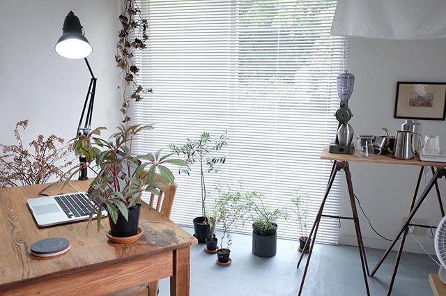 一人暮らしインテリア 観葉植物