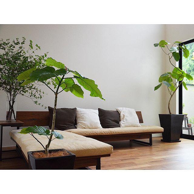 リビングインテリア 観葉植物3