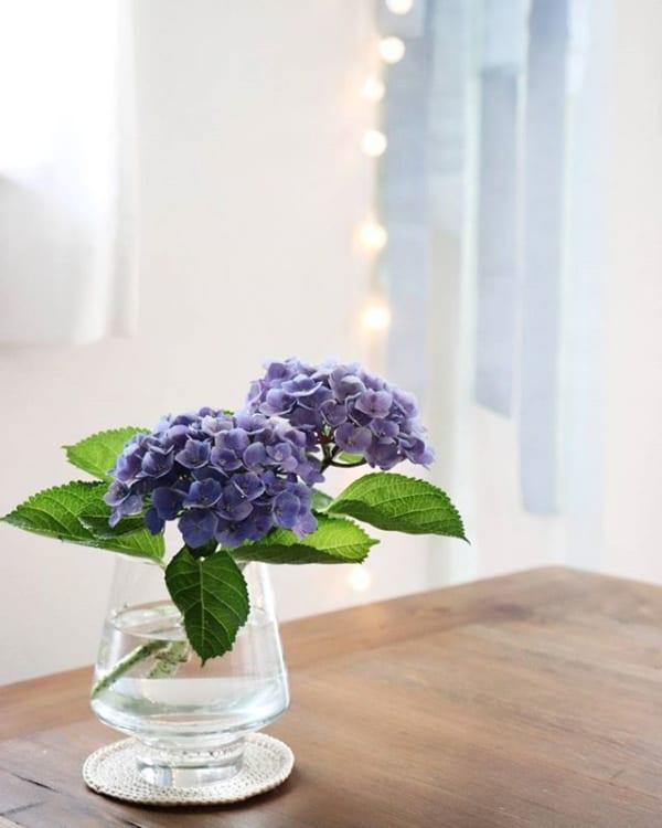 青く美しいお花で東向きの玄関を飾る