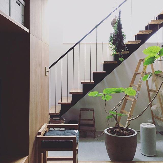 玄関インテリア 観葉植物2