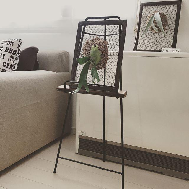 【100均インテリア】簡単グリーンアート